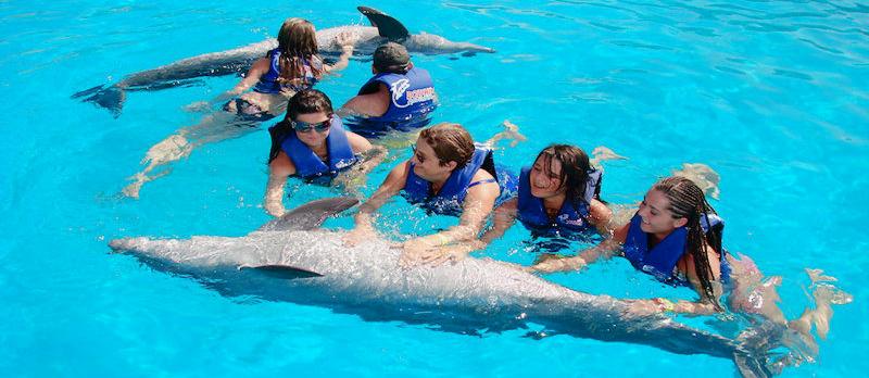Resultado de imagen para nadar con delfines
